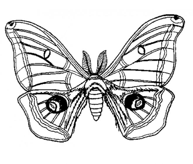 Coloriage et dessins gratuits Insecte Papillon stylisé à imprimer
