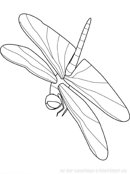 Coloriage et dessins gratuits Insecte qui vole maternelle à imprimer
