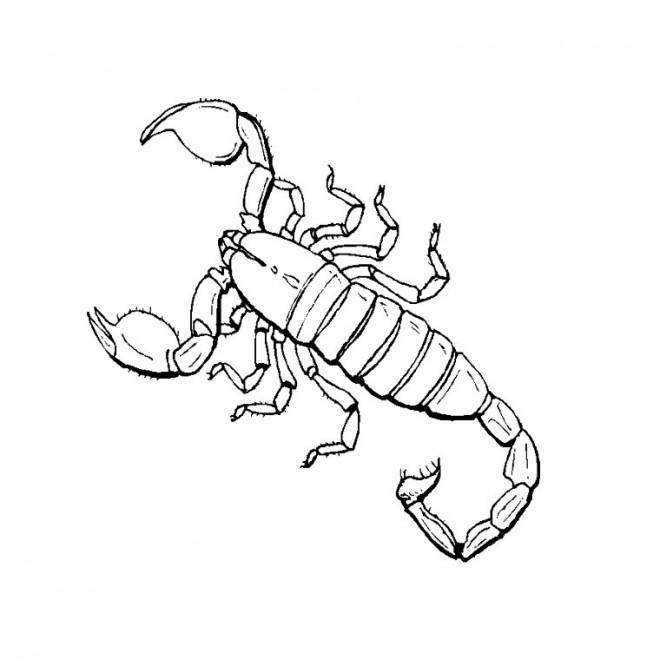 Coloriage et dessins gratuits Insecte Scorpion à imprimer