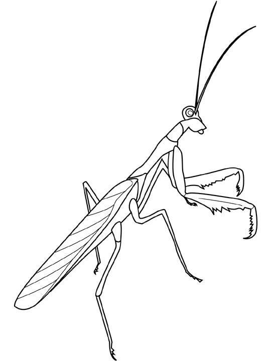 Coloriage Insecte Simple Dessin Gratuit A Imprimer