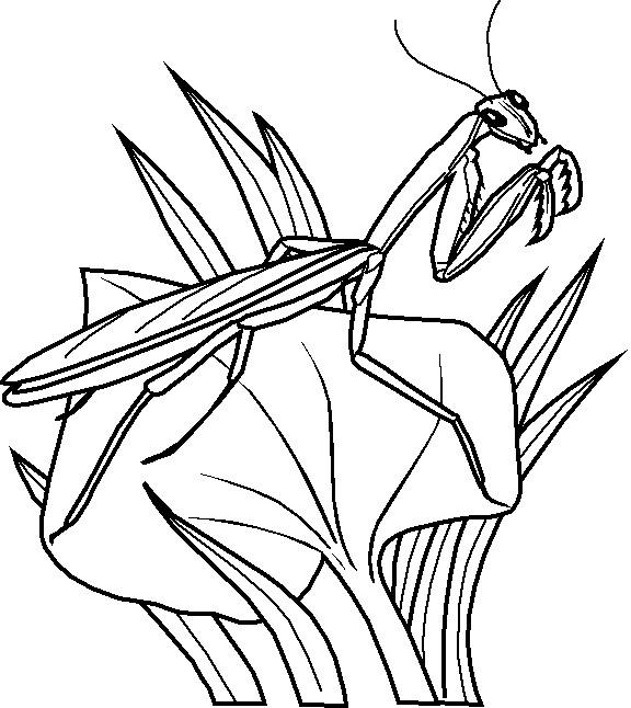 Coloriage et dessins gratuits Insecte te regarde à imprimer