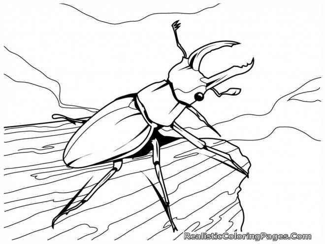 Coloriage et dessins gratuits Insecte vecteur à imprimer