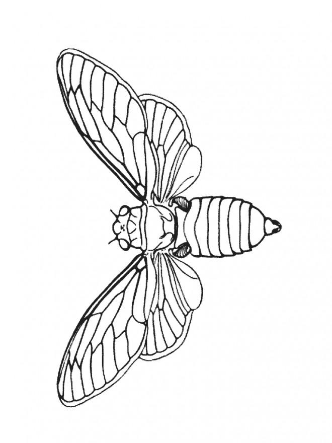 Coloriage et dessins gratuits Insecte volant à imprimer