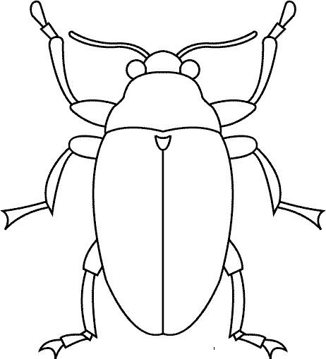Coloriage et dessins gratuits Insecte vue de face à imprimer