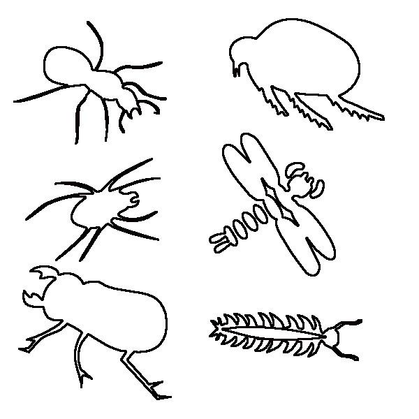 Coloriage et dessins gratuits Insectes à compléter à imprimer