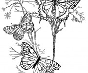 Coloriage et dessins gratuit Insectes au Jardin à imprimer