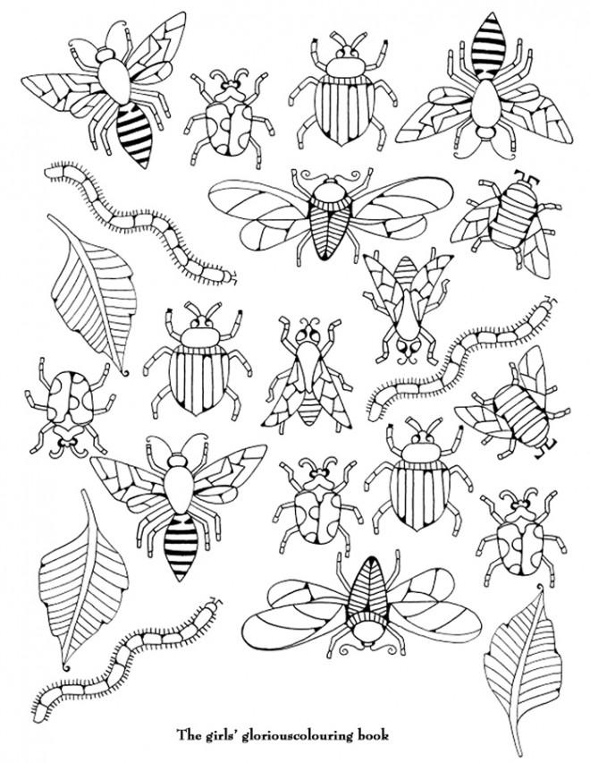 Coloriage et dessins gratuits Insectes differentes à imprimer