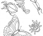 Coloriage Insectes maternelle