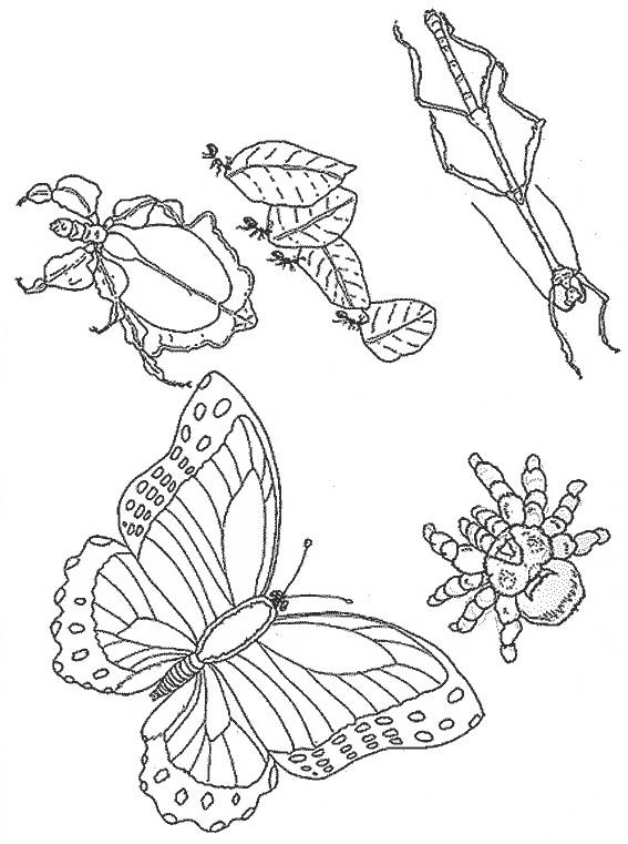 Coloriage et dessins gratuits Insectes maternelle à imprimer