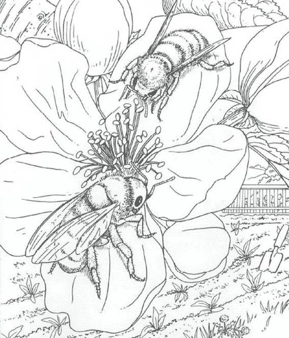 Coloriage et dessins gratuits Insectes réalistes en noir à imprimer