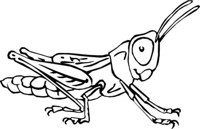 Coloriage et dessins gratuits Insectes Sauterelles à imprimer