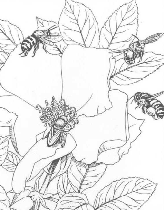 Coloriage et dessins gratuits Insectes sur les Fleurs à imprimer