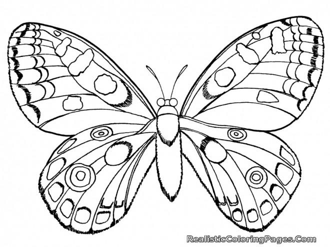 Coloriage et dessins gratuits Papillion magnifique à imprimer