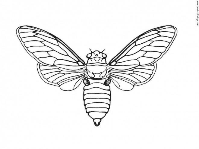 Coloriage et dessins gratuits Papillon pour enfant à imprimer