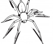 Coloriage et dessins gratuit Une petite Araignée à imprimer