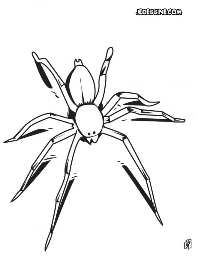 Coloriage et dessins gratuits Une petite Araignée à imprimer