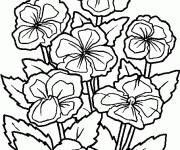 Coloriage dessin  Fleur 76