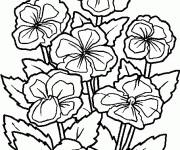 Coloriage et dessins gratuit Fleurs Cosmos à imprimer