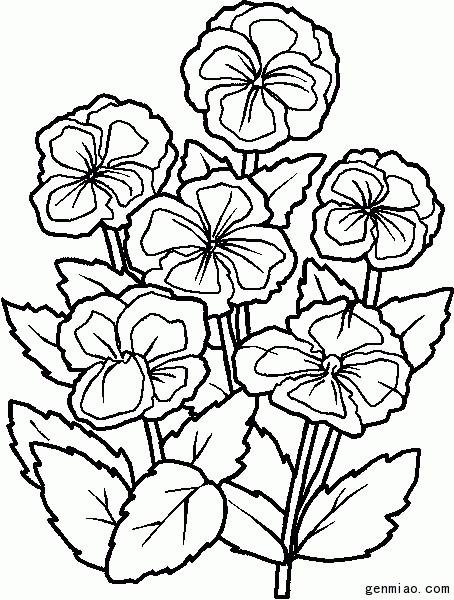 Coloriage et dessins gratuits Fleurs Cosmos à imprimer