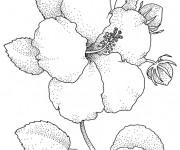 Coloriage et dessins gratuit Image de Fleur réaliste à imprimer