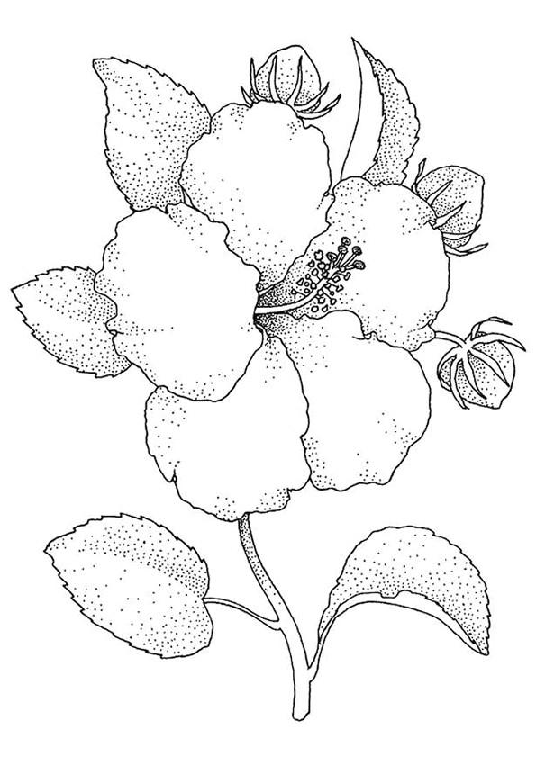 Coloriage Image De Fleur Réaliste Dessin Gratuit à Imprimer