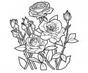Coloriage et dessins gratuit Jardin Fleurs en couleur à imprimer