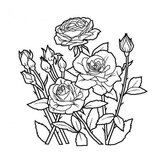 Coloriage Jardin Fleurs En Couleur Dessin Gratuit à Imprimer