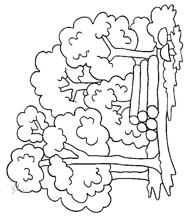 Coloriage et dessins gratuits Forêt maternelle à imprimer