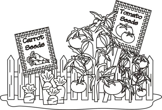 Coloriage Tomates Et Carottes Au Jardin Dessin Gratuit A Imprimer