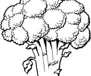 Coloriage et dessins gratuit Légume Brocoli à imprimer