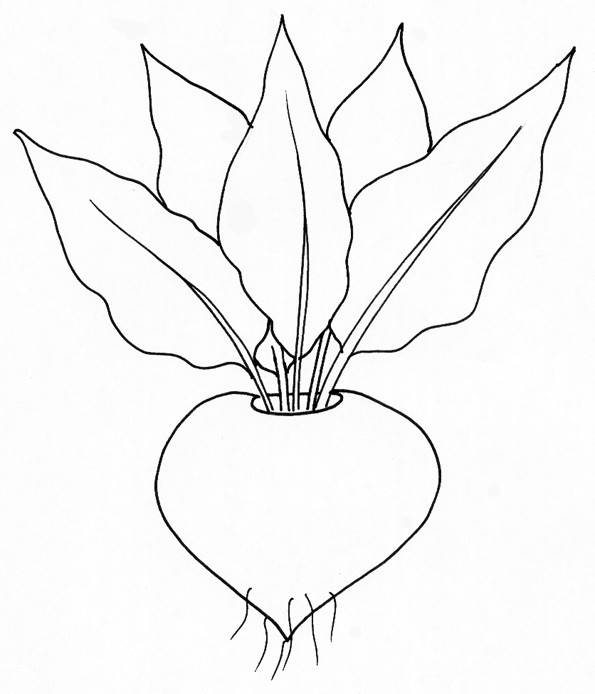 Coloriage et dessins gratuits Légume Radis à colorier à imprimer