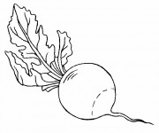 Coloriage Légume Radis facile