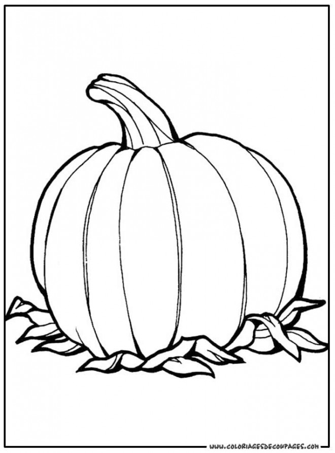 Coloriage et dessins gratuits Une Citrouille plante à imprimer