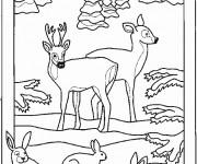 Coloriage et dessins gratuit Animaux dans la Forêt facile à imprimer