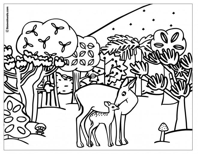 Coloriage et dessins gratuits Animaux de Forêt à imprimer