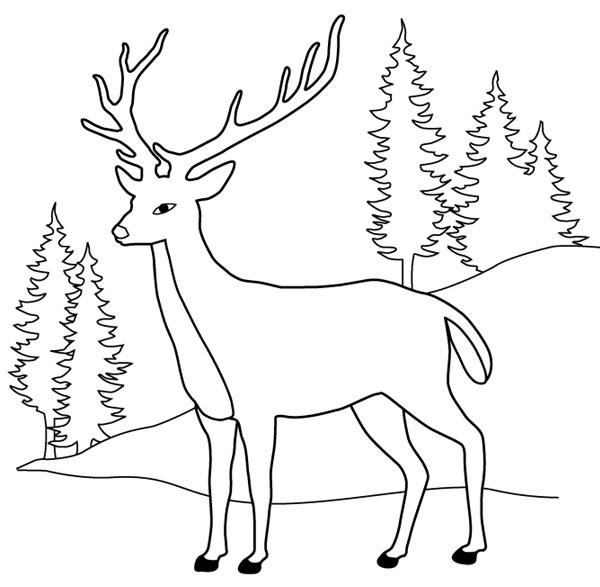 Coloriage et dessins gratuits Cerf Forêt en couleur à imprimer