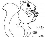 Coloriage Écureuil de Forêt qui mange
