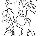 Coloriage et dessins gratuit Écureuils s'amusent dans la Forêt à imprimer