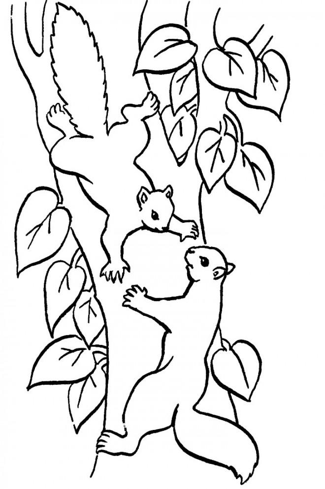 Coloriage et dessins gratuits Écureuils s'amusent dans la Forêt à imprimer