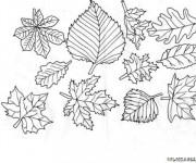 Coloriage Feuilles d'arbres Forêt