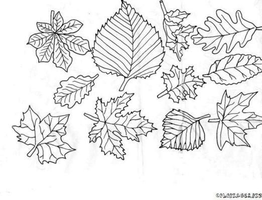 Coloriage feuilles d 39 arbres for t dessin gratuit imprimer - Feuille de coloriage gratuit ...