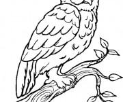 Coloriage et dessins gratuit Hibou Forêt en noir à imprimer