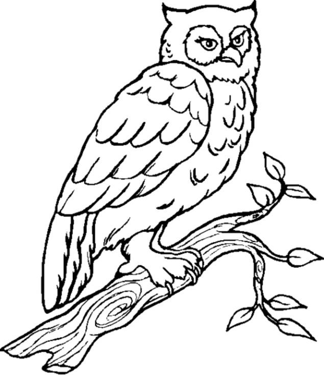 Coloriage et dessins gratuits Hibou Forêt en noir à imprimer