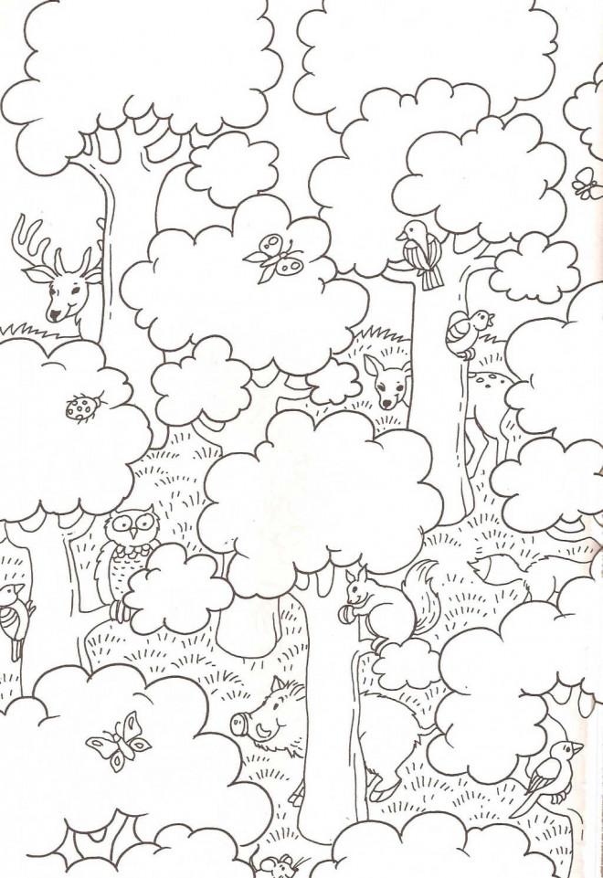 Coloriage et dessins gratuits La forêt et les animaux pour enfant à imprimer
