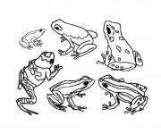 Coloriage et dessins gratuit La Grenouille Forêt à imprimer