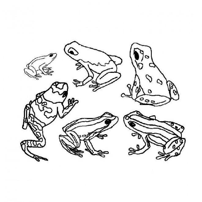 Coloriage et dessins gratuits La Grenouille Forêt à imprimer