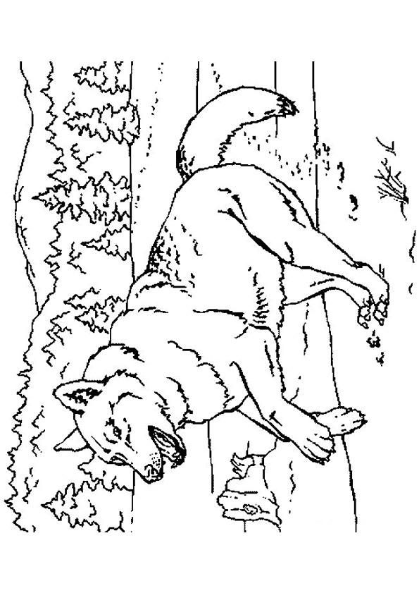 Coloriage et dessins gratuits Le loup Forêt à imprimer