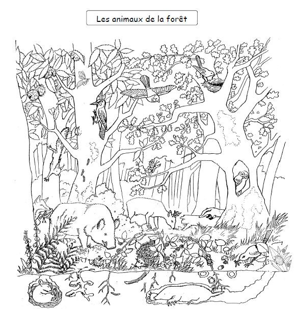 Coloriage Les animaux de la Forêt à découper