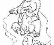 Coloriage Ours en famille de forêt
