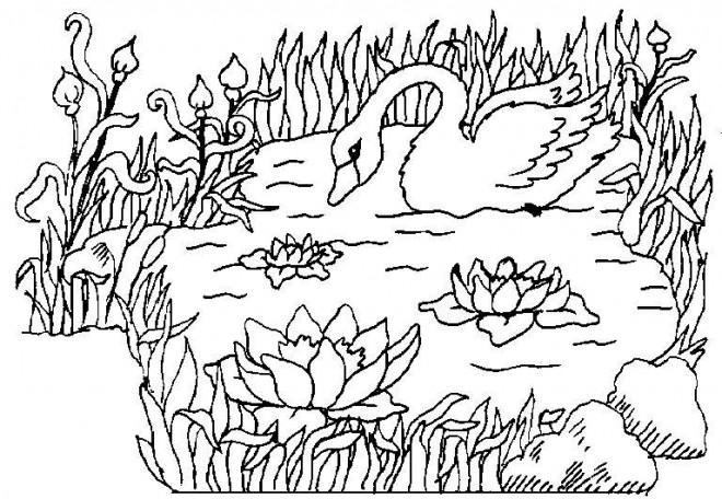 Coloriage et dessins gratuits Canard sur Lac à imprimer
